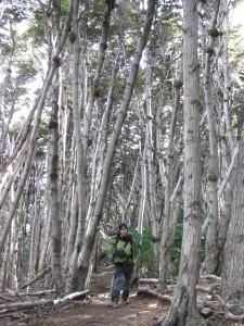 Alex am Weg zum Cerro Guanaco