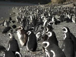 alles voll von Pinguinen - soooo cooool!