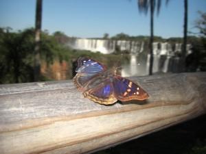 unzaehlige Schmetterlinge bei den Faellen
