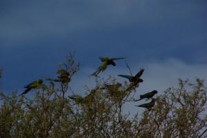 Wau, Papageien am Weg !