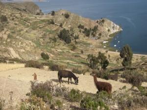 Natuerlich duerfen Lamas und Esel auch nicht fehlen