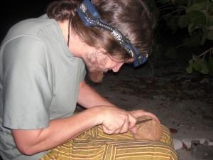 Die Kokosnuss wird fuer den Abendcocktail vorbereitet.