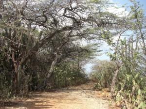 Stacheln ueberall - der Weg die Klippen entlang