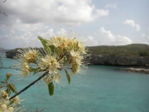 Auch Blumen wachsen neben den Kakteen - Terry, welche ist das wohl ;-)
