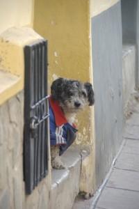 Der Adidas Hund - grimmiger Bewacher eines Hauses in Potosi