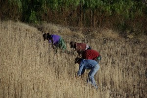 Durch harte Arbeit waechst grad so viel dass die Menschen im Maragua Krater ueberleben koennen