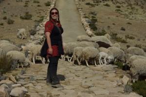 Dani und Schafe - wie immer verstehen sie sich gut ;-)