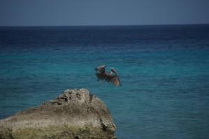 morgens, wenn der Strand noch menschenleer ist, drehen immer 1-2 Pelikane in der Bucht ihre Runde und fischen