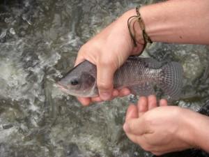 Wenn man schnell ist kann man die kleinen Fische mit der Hand fangen :-)