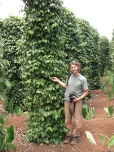 ...an den grossen Pfefferpflanzen von denen es wiederum viele Plantagen gab.