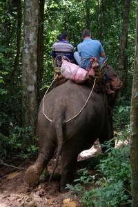 Der Elefantendame scheinen weder der Schlamm noch die Steilheit des Weges etwas auszumachen...
