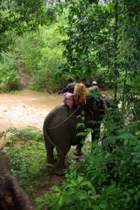 Hmmm, da sollen wir drueber??? Zumindest die 65 jAehrige Elefantendame ist zuversichtlich.