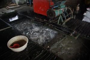 Auf der Fischfarm - unter dem Hausboot leben tausende Fische