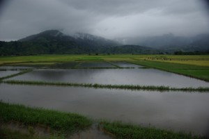 ...und wo das Gelaende es zulaesst, Reisfelder, Reisfelder...