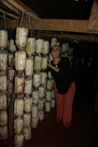 eine Pilzzucht - die Pilze wachsen aus den Plastiksaecken...