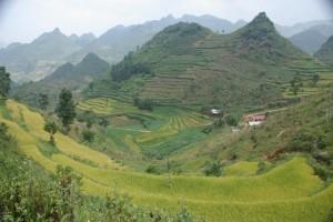 Traumhafte Landschaft, gruen, gruener am gruensten