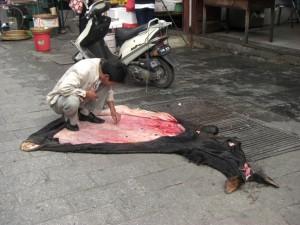 Hmmm die Haut von welchem Vieh ist das wohl??