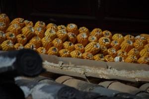 Auch der MAis traegt zu einer Abwechslung im Reisspeisseplan bei