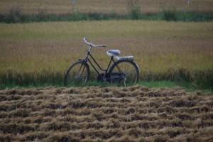 Das Fahrrad ist eines der wichtigsten verkehrsmittel