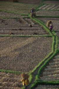 Wunderschoene Abendstimmung ueber den Reisfeldern