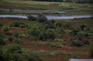 Wunderschoene grellrote Buesche - der Herbst ist doch was schoenes!