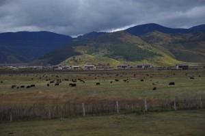 Das Hochplateau von Shangri La - endlich Tibet! Yaks, Gebetsfahnen, Berge und wunderschoene Landschaft