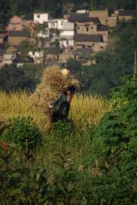 sehr hart arbeitende Menschen sieht man auch in den Reisfeldern arbeiten bzw. schwere Lasten tragen
