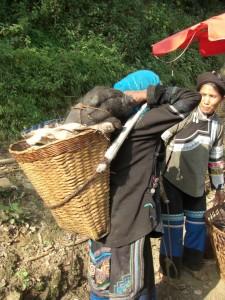 Schwein lebendig im Bucklkorb nach Hause transportiert...