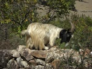 ...am Weg begegnen wir weiteren lustigen Tieren :-)...