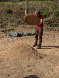 ...auch Alex versucht sich im Reis von der Streu trennen - gar nicht so einfach wie es aussieht :-)