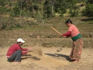 bevor der Reis wirklich zum Kochen bereit steht sind einige schweisstreibende Vorgaenge notwendig...