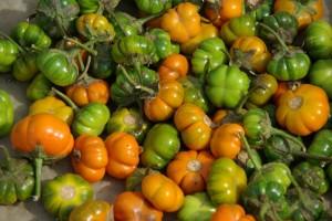 ...und das sind Tomaten oder eine chinesische Chilliart???
