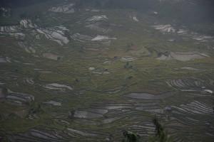 und am NAchmittag gabs wieder ein Meer an Reisterassen in Laohuzui