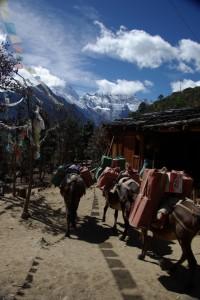 Unterm Pass kommt uns ein Tibeter mit seiner Eselskaravane entgegen, der den Weg taeglich macht...