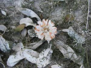 Die kleine Blume am Fuss des Potala hat die Malwut der Tibeter zu spueren bekommen :-)