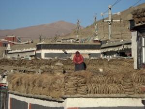 ...eine Tibeterin beim - Feuerholzholen :-) - fuer das morgendliche Butterteefeuer