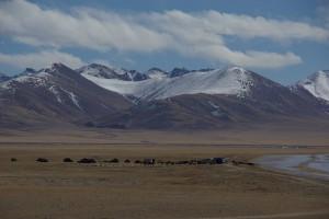 am See bietet sich uns Tibet vom Feinsten - eine Gruppe Nomaden haben ihre Zelte am Ufer aufgeschlagen