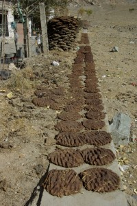 und unten angelangt treffen wir wieder aufs typische tibetische Bild der trocknenden Kuhfladen, wo auch immer Platz dafuer gefunden wird :-)