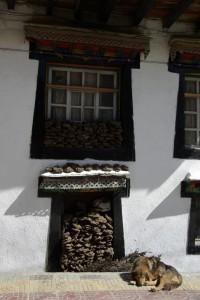 In Nyalam starten wir in Richtung Shishapagma Basislager, am Weg immer wieder der Brennmittelvorrat :-) der tibetischen Haeuser