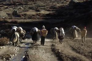 ...vor uns die Gruppe Tibeter mit den Yaks - deren Mist ist ein sehr wichtiges(das einzige) Brennmittel in Tibet