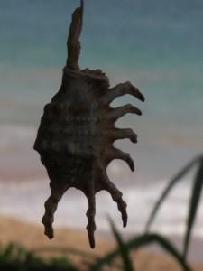 ...das ist eindeutig unser Star - eine wunderschoene Muschel, die wir vor unserem Zelt gefunden haben.