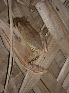 Interessante Gaeste haben wir in der Huette - als der Frosch uns aber das Bett nassspritzte, als wir ihn zu vertreiben versuchten, hatten wir keine Freude mehr :-)