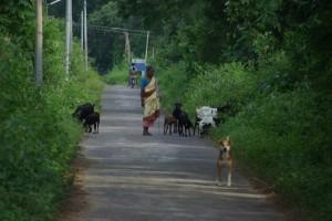 Es gibt auch eine (einzige) Strasse auf der Insel - allerdings mit seeehr wenig Verkehr :-)