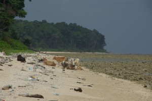 Wir machen laenge Runden auf dem endlosen Strand...