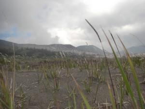 Im Krater wechseln sich Sandwueste mit ein paar Graesern...