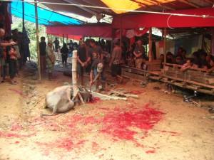...es ist vollbracht, das arme Tier hat endlich den Kampf aufgegeben - für uns schwer zu akzeptieren diese Tradition...