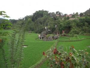 Wunderschöne Landschaft am Weg, hier eine Anlage von Torajagräbern inmitten der Reisfelder, traumhaft