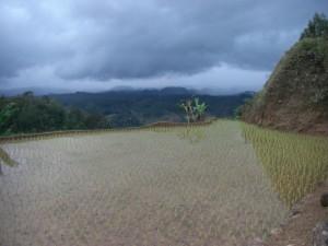 ...ein zum Dorf gehördender Acker...der Regen kündigt sich schon an.