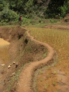 ...auf schmalen Wegen geht man durch die Reisfelder, damit ja kein Fleck fruchtbarer Boden ungenutzt bleibt