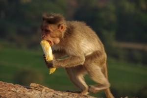 Schnell weg bevor mir jemand MEINE Banane wegnimmt